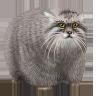 Настроение: Кот